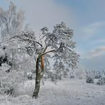 Latvijas daba /Lv/.