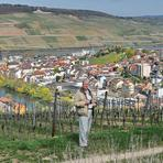Rheinfahrt. Bingen.