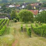 Jugenheim in Rheinhessen /De/.