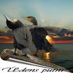 Ūdens putni