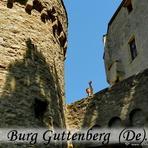 Greifvögel. Burg Guttenberg (Haßmersheim). Deutschland. /De/. Germany.