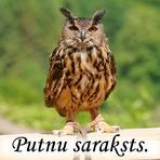 Putnu saraksts. Informācija. Kontakti. Sadarbības saites.