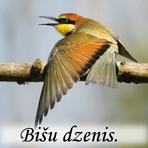 Bišu dzenis /Merops apiaster/.
