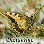 Dižtauriņi /Papilionidae/. Lielie raibeņi /Nympahalidae/.