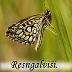 Resngalvīši Hesperidae/.