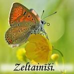 Zeltainīši /Lycaenidae/.