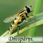 Divspārņi /Diptera/.
