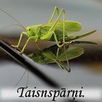 Taisnspārņi /Orthoptera/.