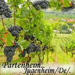 Partenheim. Jugenheim in Rheinhessen. Deutschland./De/. Germany.