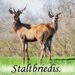 Staltbriedis /Cervus elaphus/.