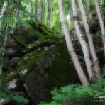 Neuburger Wald. /De/.