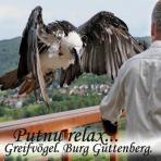 Greifvögel. /Plēšputni/. Burg Guttenberg. Relax...